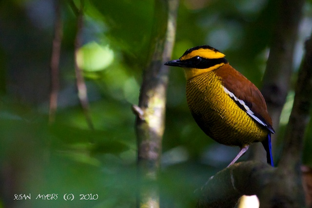 Asian Birds Pictures 20