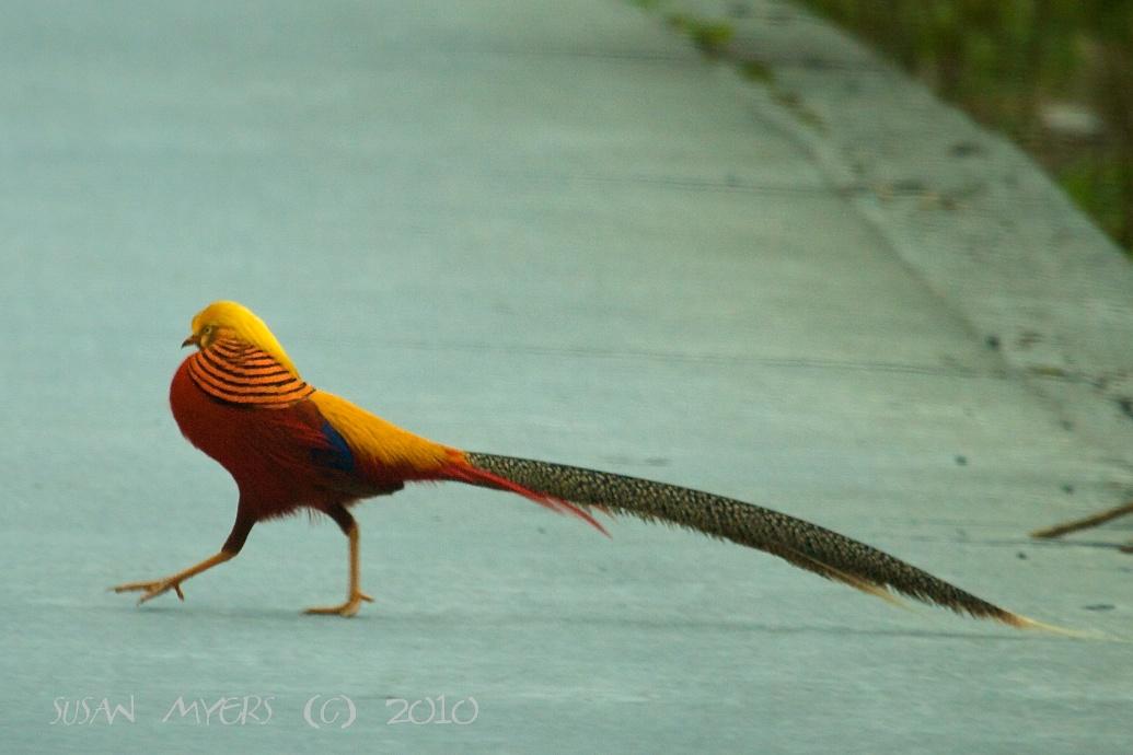 Gallery For > Crazy Looking Birds