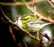 Thumbnail image for Winter Birding in Oregon