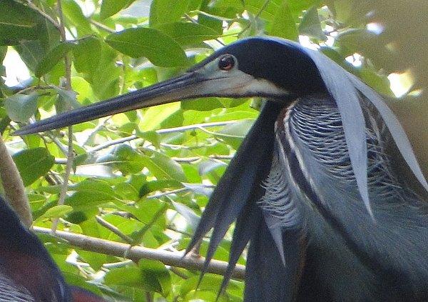 Agami Heron 4- Luis Francisco Cortés-1