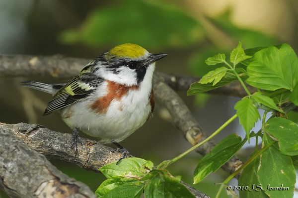 Post image for Featured Bird Blogger of the Week