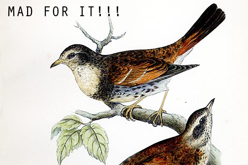 Post image for What A Turdus!
