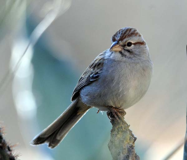 Post image for The Rufous-winged Sparrow Bed-and-Breakfast