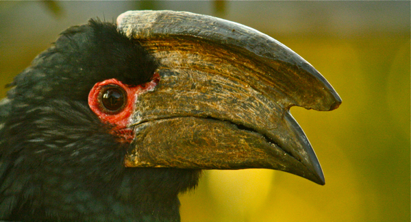 Post image for hornbills and other silly birds