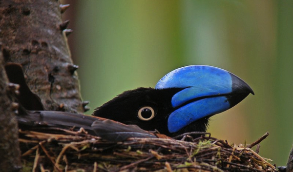 Post image for Notable mentions: Digiscoper of the Year 2010