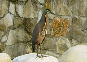 Thumbnail image for Palenque, Mexico – Birding the Maya Ruins