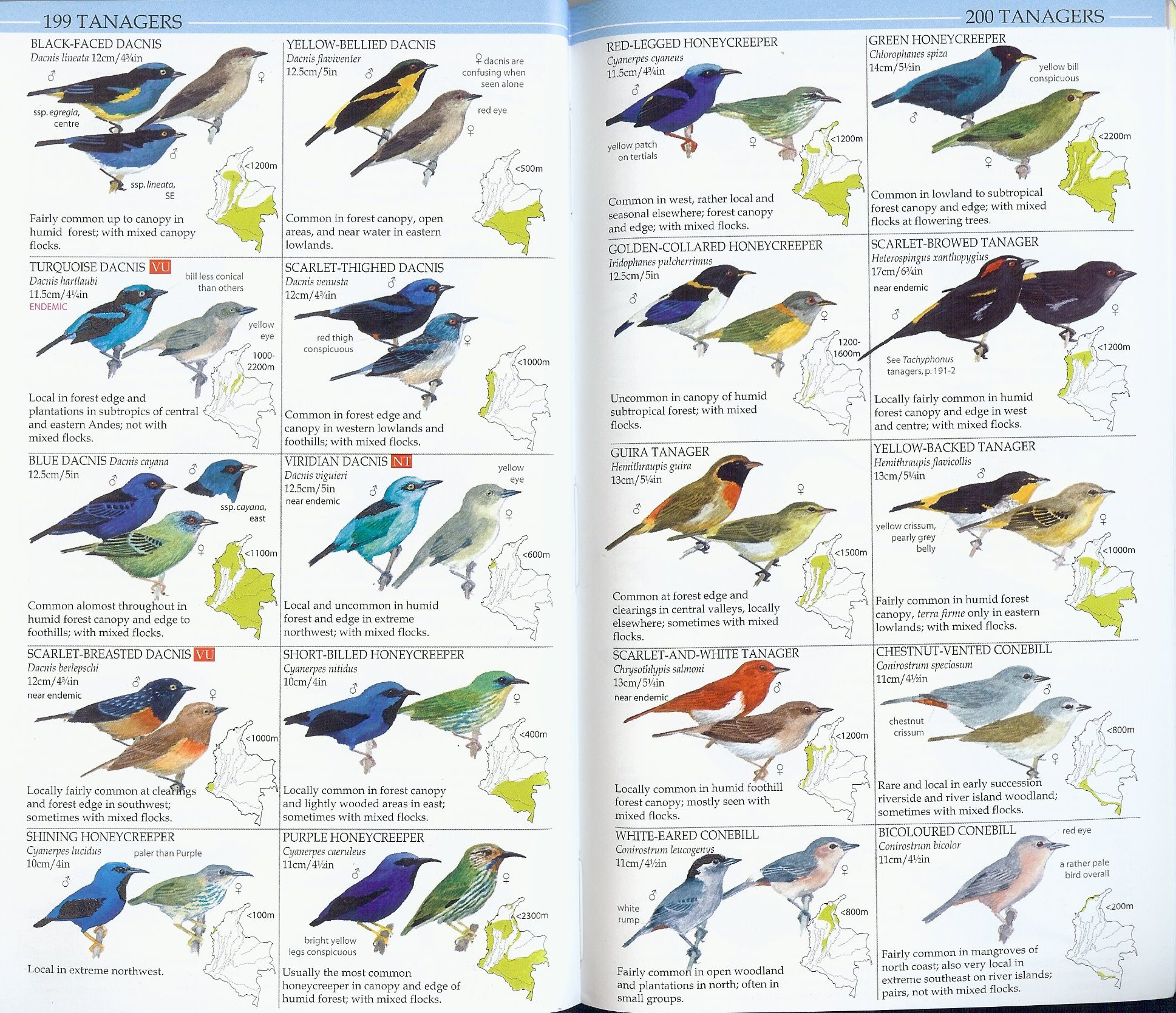 Birds of Colombia - ProAves Plate Tanagers