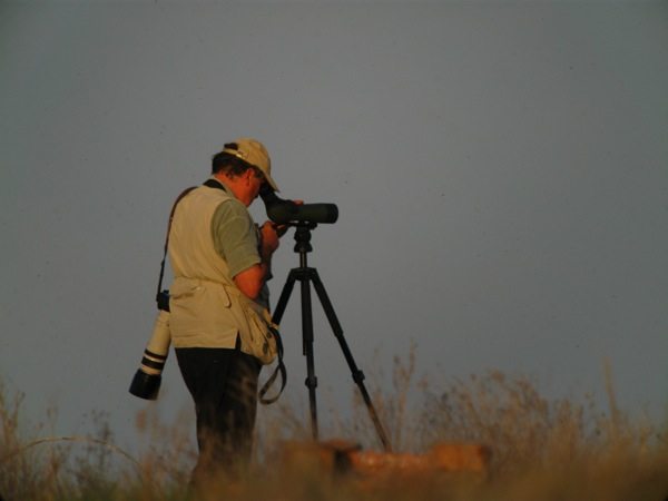 Post image for British Birders – a separate subspecies?