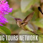 World Birding Tours Network