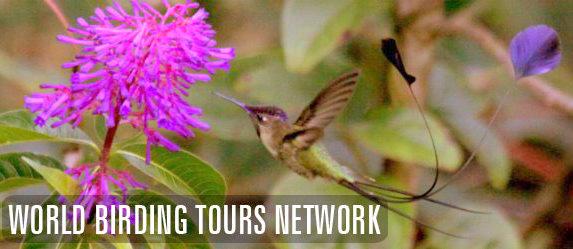 World birding Tours Network. Marvelous Spatuletail. Gunnar Engblom