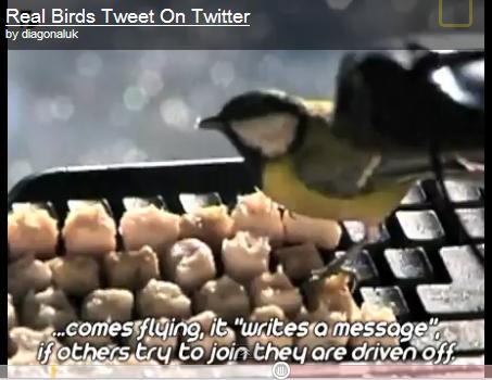 Real tweeting birds