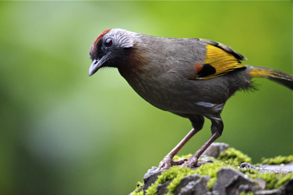 Post image for Birding Doi Inthanon – Thailand's highest mountain