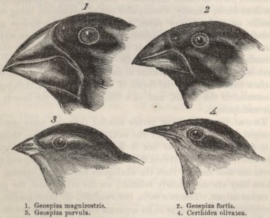 Post image for Darwin's Finches