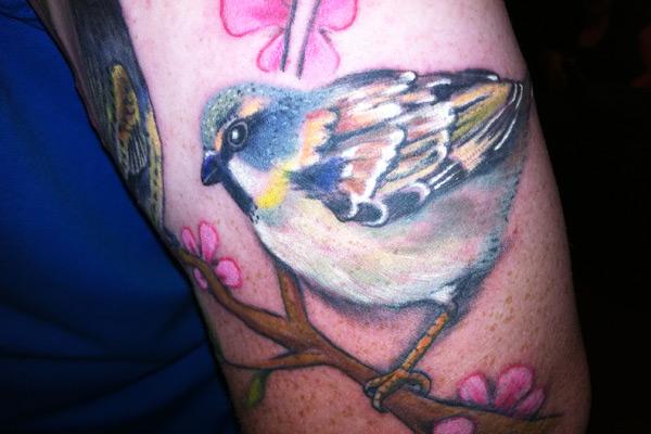Dead Sea Sparrow - on Tristan Reids arm
