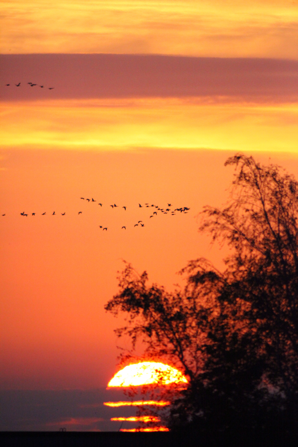 Post image for Sunrise digiscoping