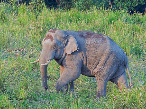 3 great days of birding in Central Thailand with Elephants on sight