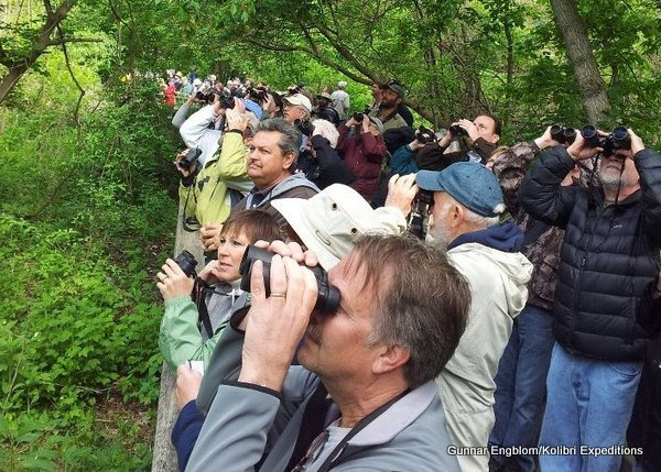 Birders at Magee Marsh boardwalk. Image: Gunnar Engblom, Kolibri Expeditions, 2012.