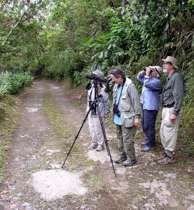 Group Looking at Northern Potoo