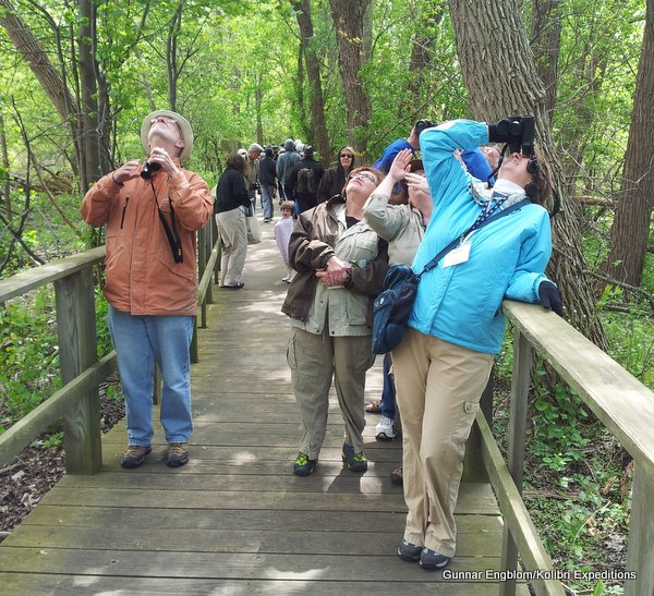The magic of birding on the Magee Boardwalk, Black Swamp Bird Observatory,  Ohio. Photo: Gunnar Engblom